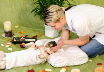 Aromatherapy massage for your dog